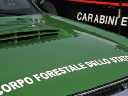 Il Corpo forestale dello Stato assorbito nell'Arma dei Carabinieri