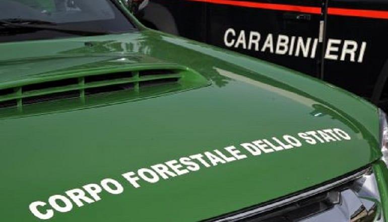 accorpamento del Corpo Forestale dello Stato nell'Arma dei Carabinieri